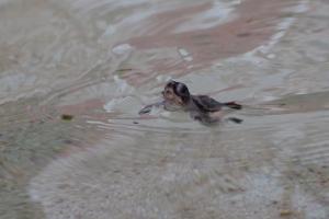 Az első levegővétel a vízben