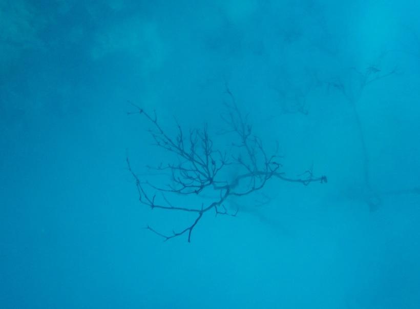 A szulfid ködben feltűnő fa