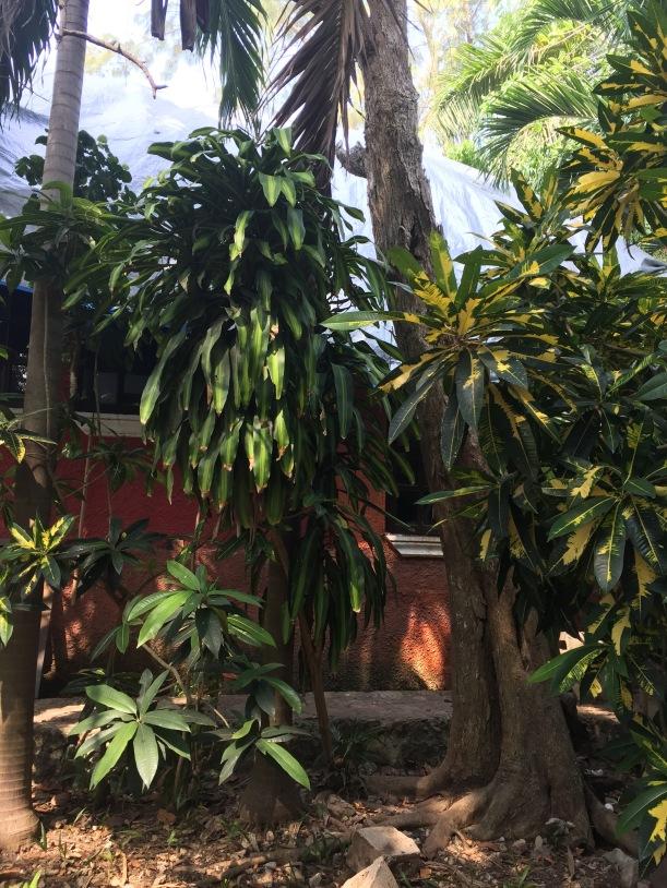 A mini dzsungel
